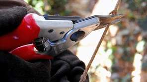 A pair of bypass-type pruners is a good