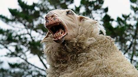 a killer sheep from the 2007 horror comic