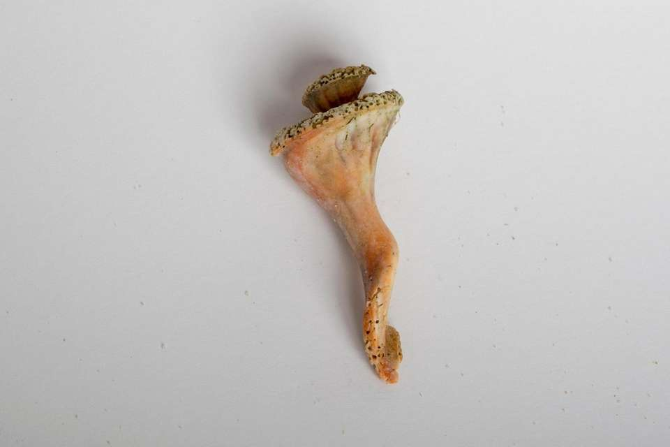 A conch shell is among objects found along