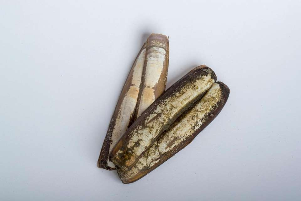 Razor clam shells are among objects found along