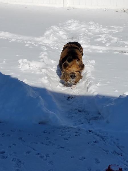 Franky enjoying the Tuesday snow.