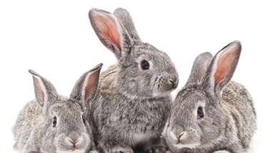 An Easter-themed event for kids features live bunnies.