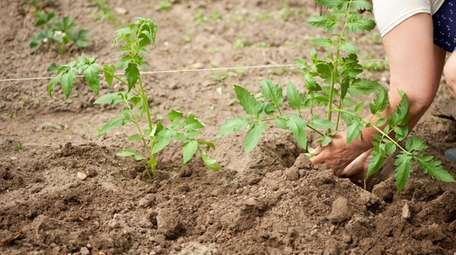 Planting as a way to celebrate life.