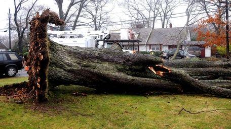 A maple tree, seen here, crushed Julia Hughes,