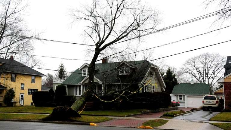 On South Wellwood Avenue in Lindenhurst, a tree