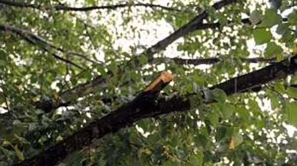 Storm damage to a tree branch.