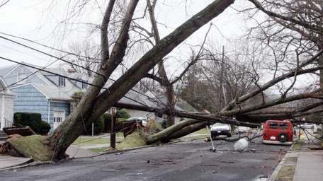 A major nor'easter uproots two trees in Massapequa