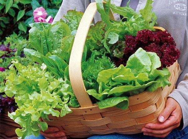A basket of freshly picked greens