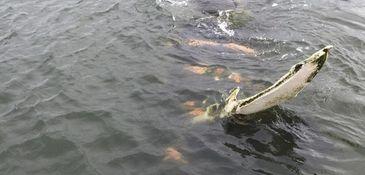 A boat bumper off Seagate, Brooklyn fooled a