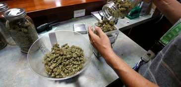 An employee places marijuana for sale into glass