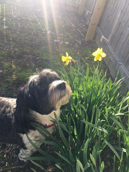 Barkley is enjoying the spring weather in Oakdale.