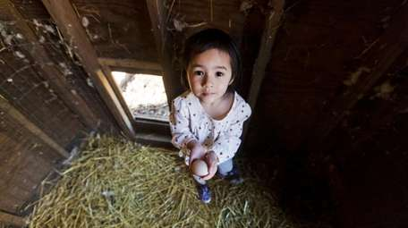 Sophie Pilipshen, 4, collects an egg from the