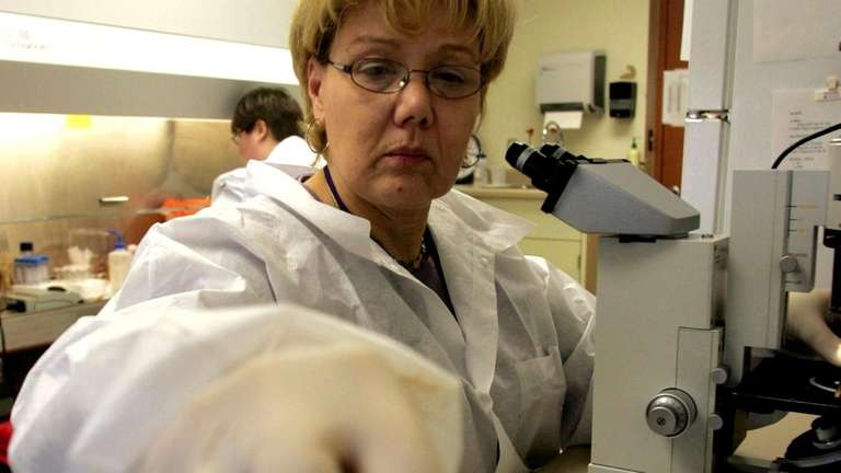 Microbiologist Sandy Jirsa looks at samples marked with
