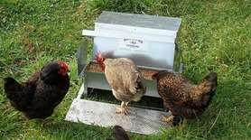 Grandpasfeeders.jpg Grandpa's Feeders are automatic chicken feeders that