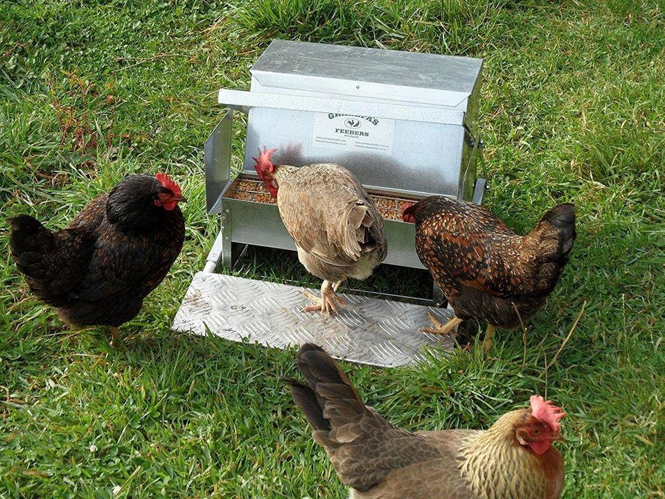 Grandpasfeeders.jpg Grandpa's Feeders are automatic chicken feeders that