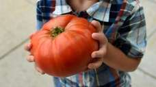 Great tomatoes lead to great expectations: Here Wyatt