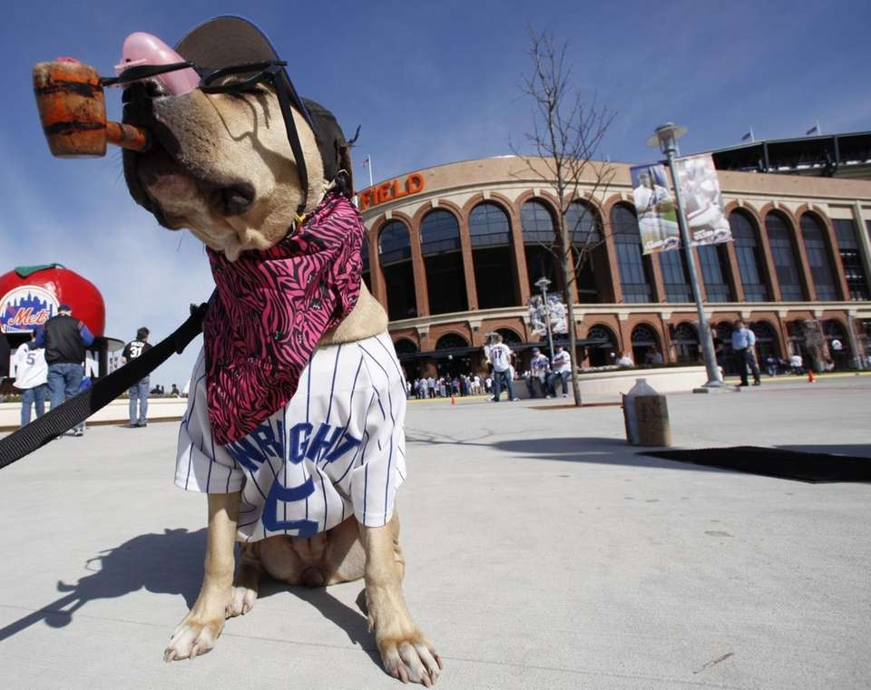 timeless design 4aeb0 3c42f Mets fan-dogs at Citi Field on Opening Day since 2009 | Newsday