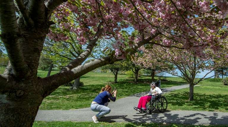 A picture-perfect day under the blooming cherry blossoms