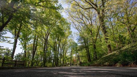 Tree-lined Dogwood Avenue in Roslyn Harbor. Village trustees