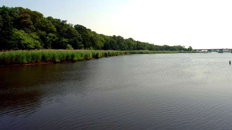 Open land on the Peconic River in Riverhead.