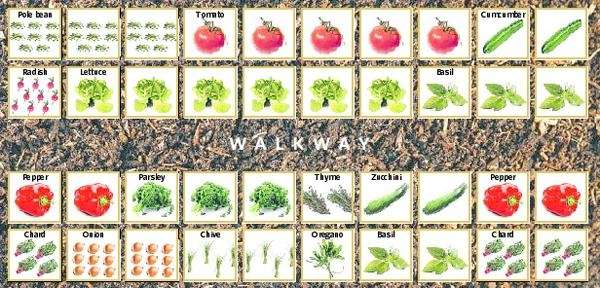 Garden Design: Garden Design With How To Grow A Vegetable Garden