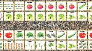 10-BY-5-FOOT GARDEN: You can grow 101 vegetable plants