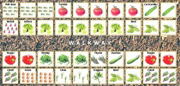 How To Grow A Vegetable Garden Mountain Gardening SmallSpace