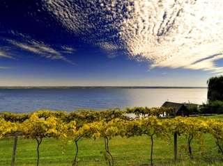 Cayuga Lake seen from the vineyards at the