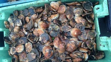 Participants in the Shellfish Restoration Project help clean