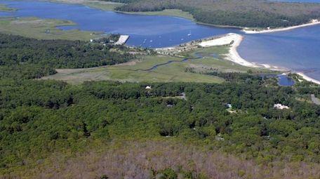 Nature Paddlers can see diamondback terrapins and river