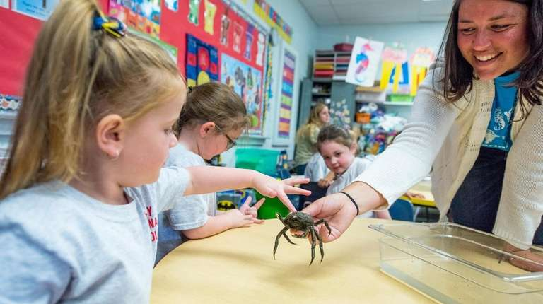 Pre-K students interact with a spider crab during