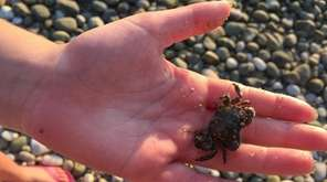 A crab is on hand for a look-see