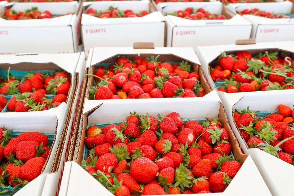 Quarts of strawberries from Latham's Farm in Orient