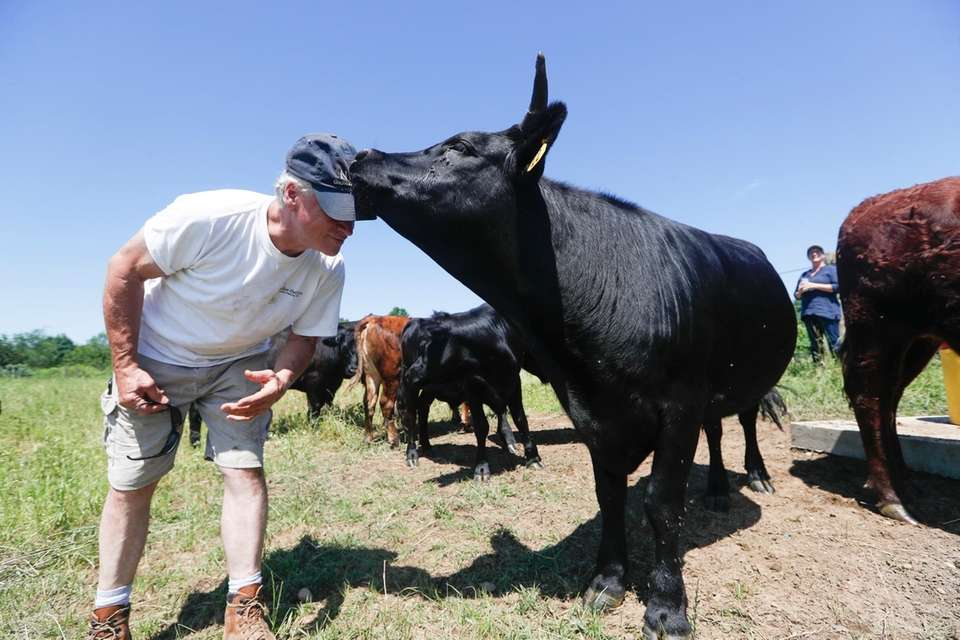 Bill Ackermann of Cutchogue tends to his grass-fed