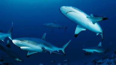 "NatGeo Wild's ""Sharkfest"" is a two-week  shark-centric"