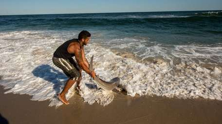 Chris Stefanou hauls in a sandbar shark at