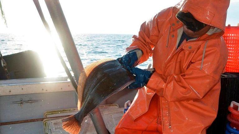 A commercial fisherman sorts fluke on Long Island