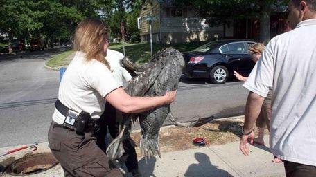Terry Kohutka of Hempstead Town Animal Control saved