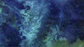 Blooms of phytoplankton forming patterns of blue and