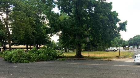 A large tree limb fell Sunday morning on