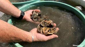 East Hampton Town Aquaculture Department director Barley Dunne