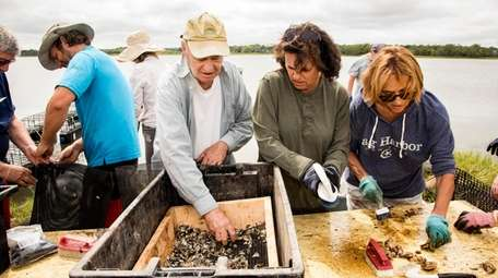 Harold Cook separates oysters Saturday while Diane and