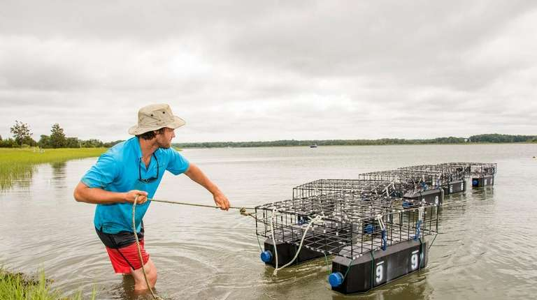 Connor Burke retrieves oyster grow cages in Accabonac