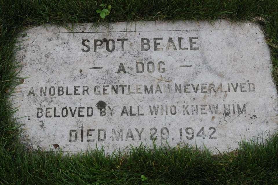 Grave of a dog in the garden during