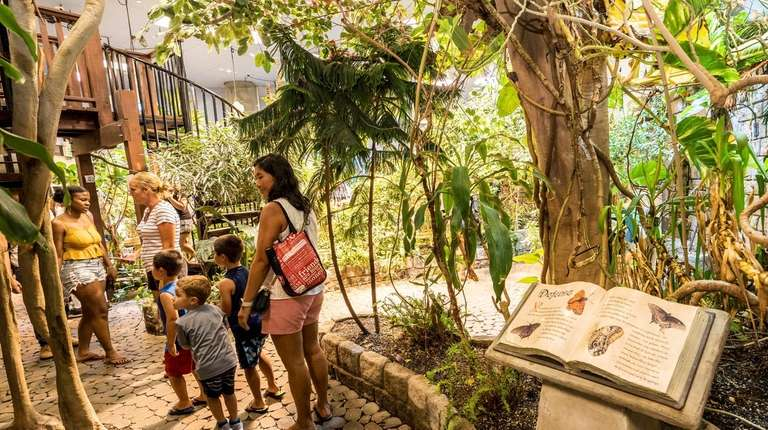 Visitors in the walk-through butterfly exhibit at the