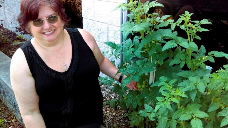 Annette Pennell of West Babylon has planted tomatoes