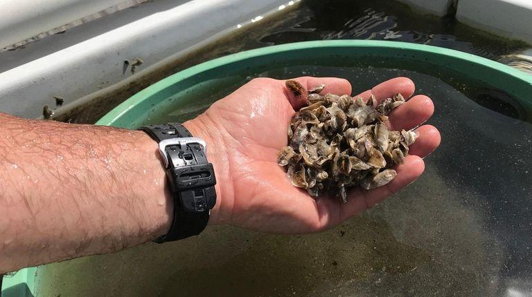 "East Hampton Director of Aquaculture John ""Barley"" Dunne"