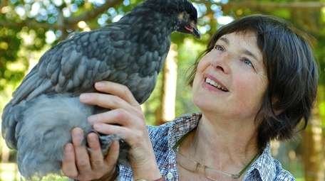 Isabella Rossellini with one of her heritage-breed chickens.