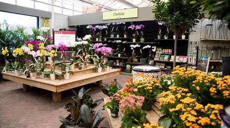 Orchids and other plants are on display inside