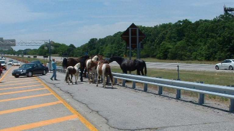 Horses run against traffic about noon Tuesday in
